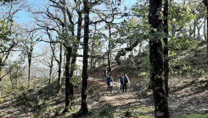 Randonnée Belle forêt avec DAR EL AIN Ecotourisme et loisirs - Tourisme alternatif