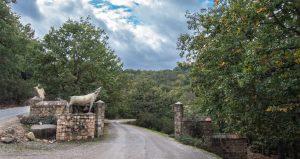 Visite Guidée et randonnée dans les parcs nationaux avec DAR EL AIN Ecotourisme et loisirs - Tourisme laternatif